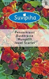 Seemned mungalill Jewel Scarlet, madal
