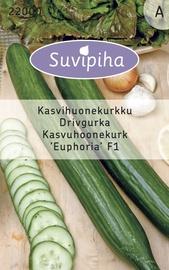 Seemned kurk Euphoria F1, kasvuhoone, 6s