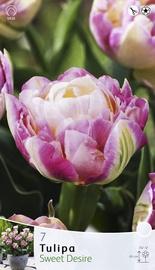 Lillesibul tulp Sweet Desire, 7tk