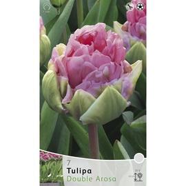 Lillesibul tulp Double Arosa, 7tk