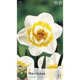 Lillesibul nartsiss Love Call, 5tk