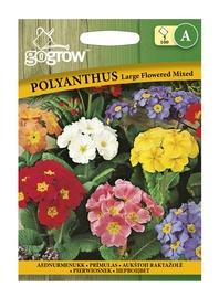 Seemned, aednurmenukk Large Flowered Mix