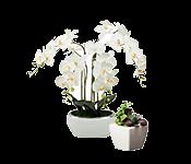 Dirbtinės gėlės, augalai